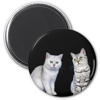 Two british short hair cats on black background 2 inch round magnet