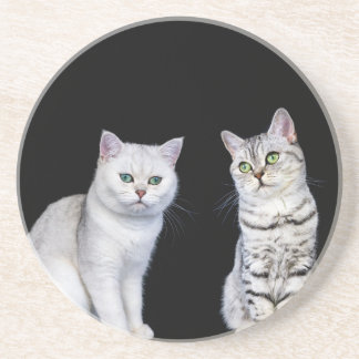 Two british short hair cats on black background coaster