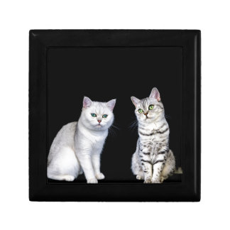 Two british short hair cats on black background gift box