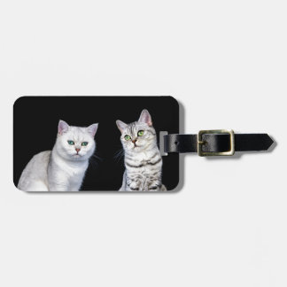 Two british short hair cats on black background luggage tag
