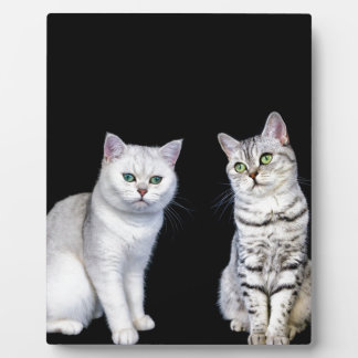 Two british short hair cats on black background plaque
