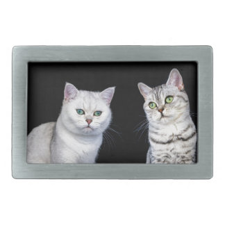Two british short hair cats on black background rectangular belt buckles