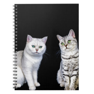 Two british short hair cats on black background spiral notebook