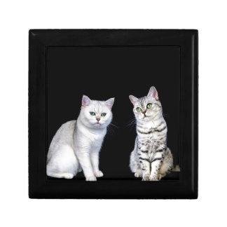 Two british short hair cats on black background trinket box