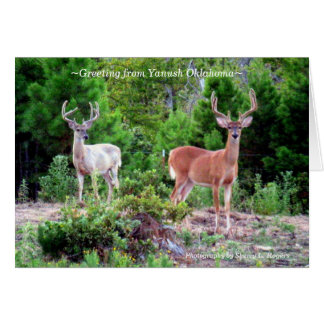 ~Two Bucks on Rogers Mountain~ Card