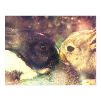 Two Bunnies, Rabit Photograph, Purple Magical Postcards