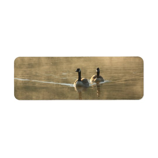 two canada geese swimming on the river by sunrise