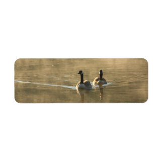 two canada geese swimming on the river by sunrise return address label