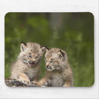 Two Canada Lynx Kittens Playing On A Log Mouse Pad