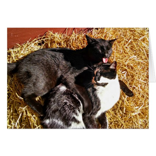 Two Cats in Love Greeting Card