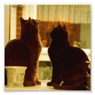 Two Cats in the Kitchen Window Sill Photographic Print