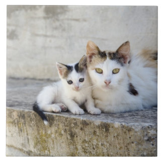 Two cats on stone steps tile