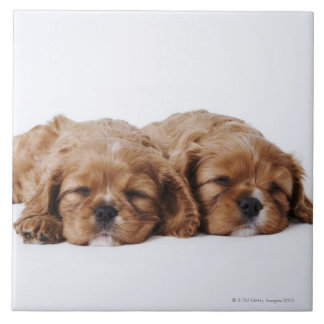 Two Cavalier King Charles Spaniel puppies Ceramic Tile