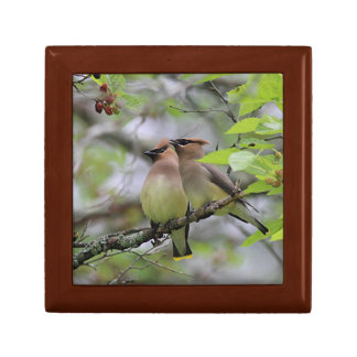 Two Cedar Waxwings Jewelry Box
