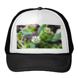 Two Chickweed Flowers Trucker Hat