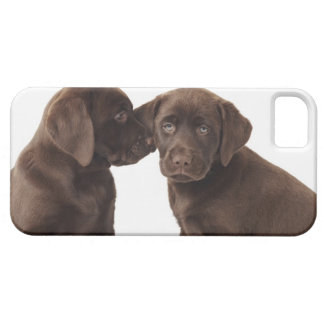 Two chocolate Labrador Retriever Puppies iPhone 5 Case