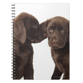 Two chocolate Labrador Retriever Puppies Notebook