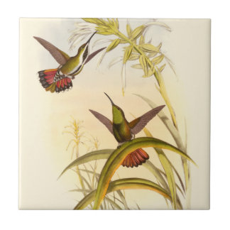 Two Colorful Hummingbirds Aiming for Same Flower Tile