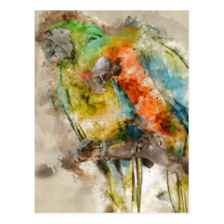 Two Colorful Macaws Postcard