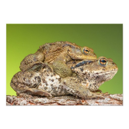 Two Common Toads Bufo Bufo Together Personalized Invite