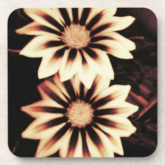 Two Cream Gazania Flowers Coaster