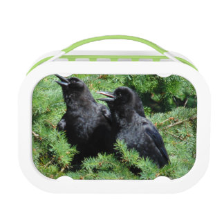 Two Crows Lunch Box