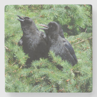 Two Crows Stone Coaster