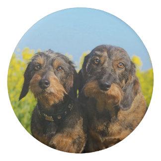 Two Cute Dachshund Dogs Dackel Doxie Photo ; Eraser