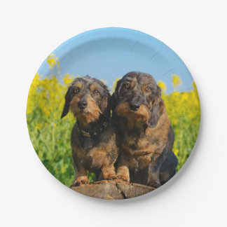 Two Cute Dachshund Dogs Dackel Photo Funny Party Paper Plate