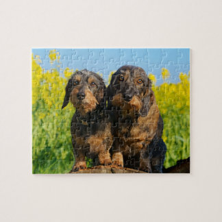 Two Cute Dachshund Dogs Dackel Photo - Game 8x10 Jigsaw Puzzle