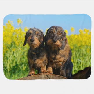 Two Cute Dachshunds Dogs Dackel Friends Pet Photo Baby Blankets