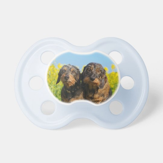 Two Cute Dachshunds Dogs Dackel Friends Pet Photo Pacifiers