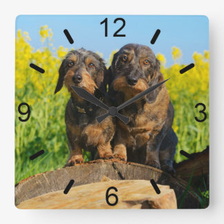 Two Cute Dachshunds Dogs Dackel Friends Pet Photo Square Wall Clock