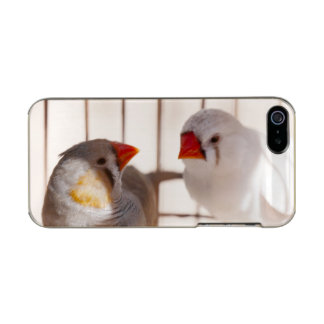 Two Cute Finch Birds in Cage Incipio Feather® Shine iPhone 5 Case