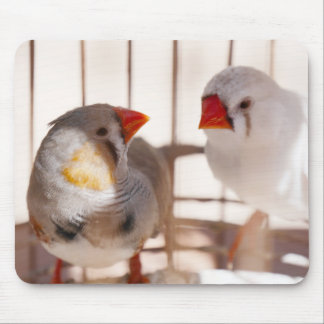 Two Cute Finch Birds in Cage Mouse Pad