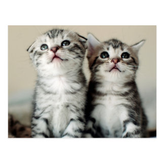 Two Cute Kittens Postcard