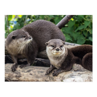 Two Cute Otters | Otter Postcards