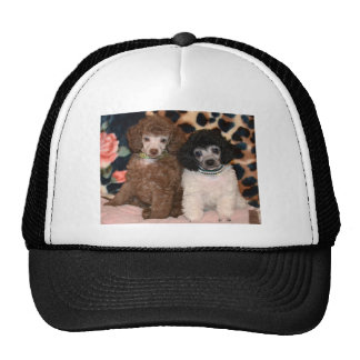 Two Cute Poodle Toy Poodle Puppies Trucker Hat