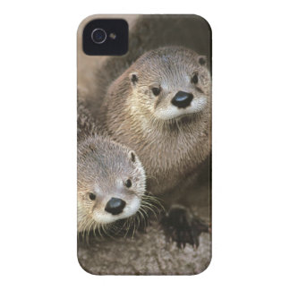 Two Cute River Otters (Lontra canadensis) iPhone 4 Cover