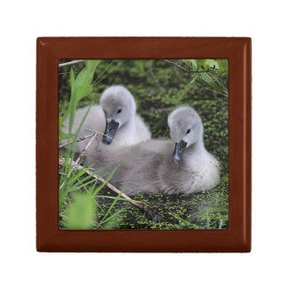 Two Cygnets Gift Box