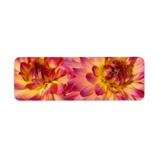 two dahlias in yellow and pink return address label