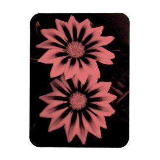 Two Dark Pink Gazanias Magnet