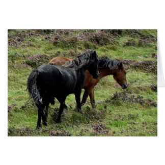 Two Dartmoor Ponies Roaming In The Heather Card
