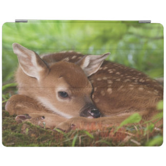 Two day old White-tailed Deer baby, Kentucky. iPad Cover