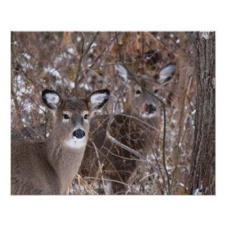 Two Deer in the Woods Poster