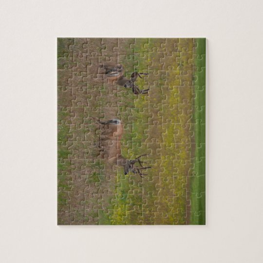 Two Deer Puzzle