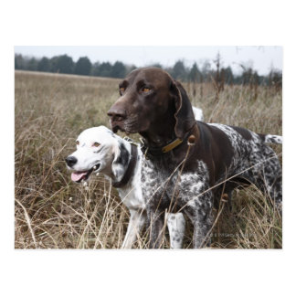 Two Dogs in Field, Houston, Texas, USA Postcard