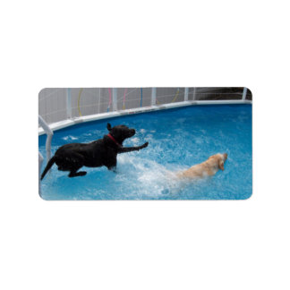 Two dogs jumping into a swimming pool!