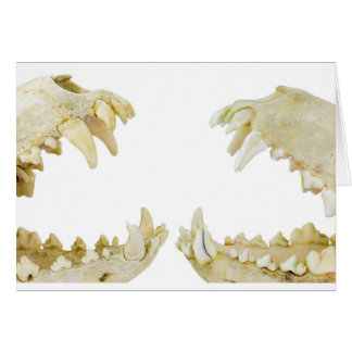 Two dogs skulls with open mouths card