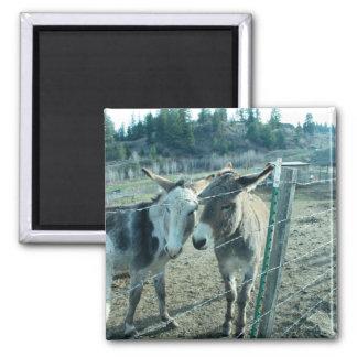 Two Donkeys Magnet